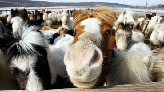 JetBlue: The Law Says We Have To Let Mini Horses On The Plane