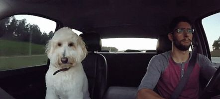 Nothing Is As Happy As A Racing Driver Jamming Out With His Very Good Dog