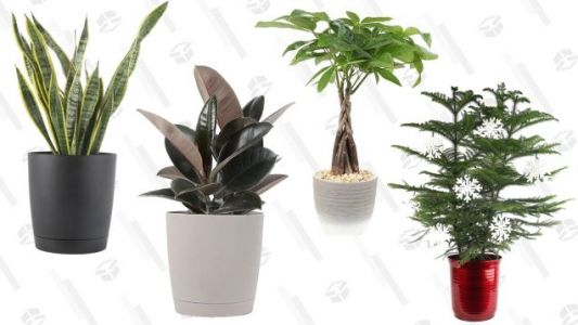 Fill the Void In Your Life With Amazon's One-Day House Plant Sale