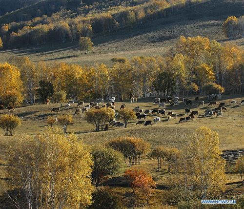 Saihanba National Forest Park in Chengde