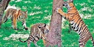 Tribals protested about the new eco-tourism project in the Amrabad Tiger Reserve!