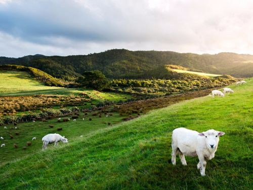 How to move to New Zealand and become a naturalized Kiwi