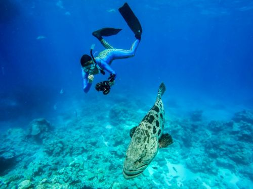Lizard Island Announces New Reef Expeditions