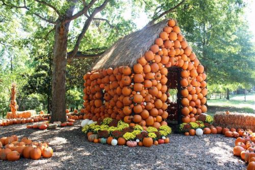 11 Fall Festivals to Attend in Nashville