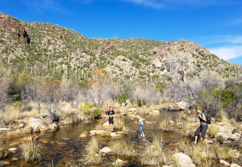 Guide to Experiencing the Magical Sabino Canyon in Tucson