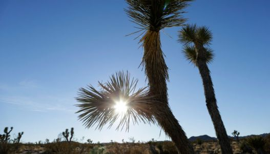 Reading Product Plugs From Joshua Tree Helped Me Understand My Industry's Twisted Heart