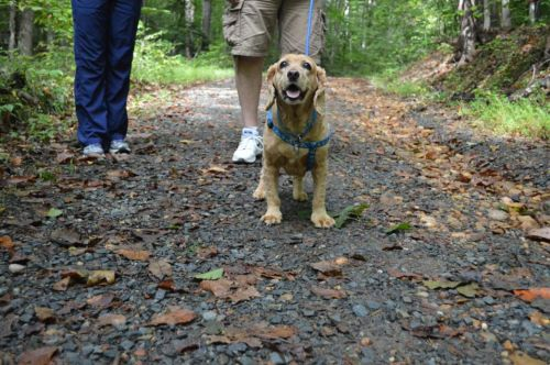 Dog-Friendly Spots In Prince William