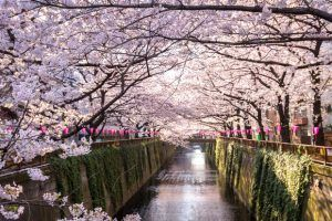 Japan may face $1.29 billion in tourism revenue due to COVID-19 outbreak