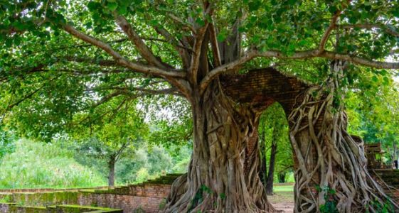 6 Reasons to Put Ayutthaya, Thailand, on Your Travel List