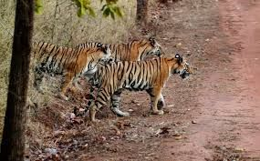 India witnesses a massive growth in wildlife tourism