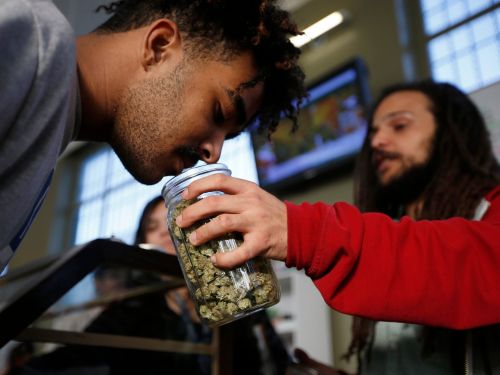 Millennial investors are buying weed stocks at a faster clip than Amazon and Netflix
