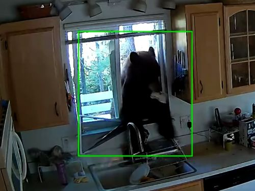A bear broke into a home to look for candy, and it was his sixth time visiting