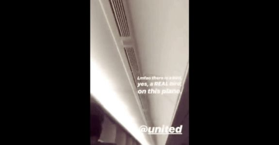 Bird Tries to Catch a United Flight to Newark, Has Very Chill Time