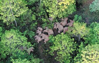 National park proposed for wild elephants