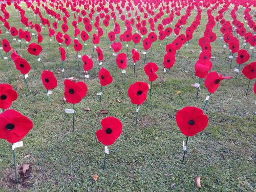 How to Commemorate ANZAC Day 2020 amid the current global crisis