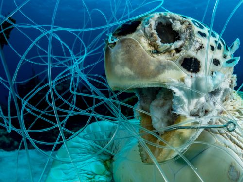 A gut-wrenching photo of a dead turtle stuck in fishing line puts the plastic problem in stark relief. The image won a prestigious award