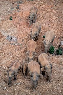Wandering elephant herd reaches major SW Chinese city