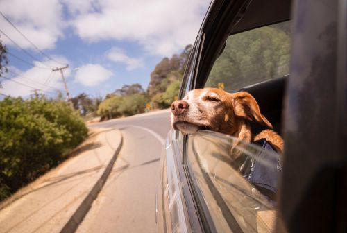 The best way to travel with pets: HomeExchange through the eyes of a golden retriever