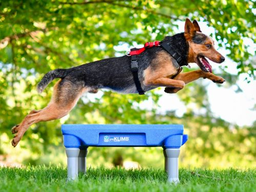 This no-pull dog harness transforms walks from stressful to relaxed - here's how it works and why I recommend it