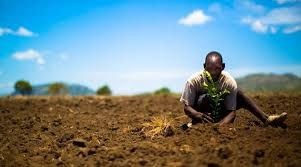 Karma Group Introduces The One Tree Planted Initiative