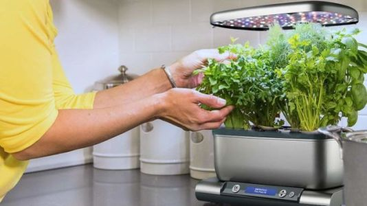 You-Yes, You-Can Grow Your Own Herbs and Vegetables With This $80 AeroGarden