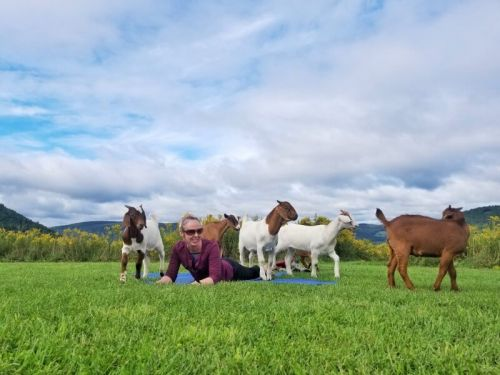Goat Yoga: How to Have A Joyful Experience in the Finger Lakes NY